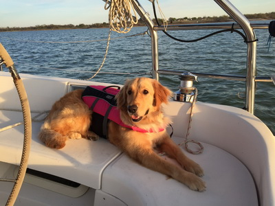 Ginger on the Boat